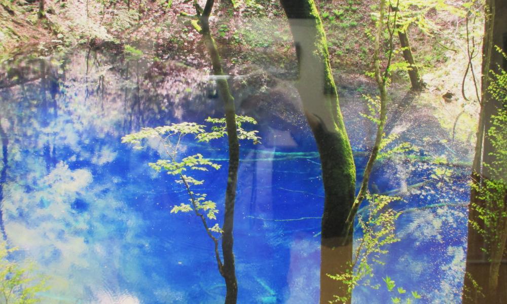 神秘のブルー 青池 憧れの十二湖33湖めぐり 保険付き 白神